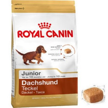 DACHSHUND JUNIOR